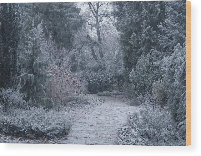 Jenny Rainbow Fine Art Photography Wood Print featuring the photograph The Pathway. Enchanted Winter Garden by Jenny Rainbow