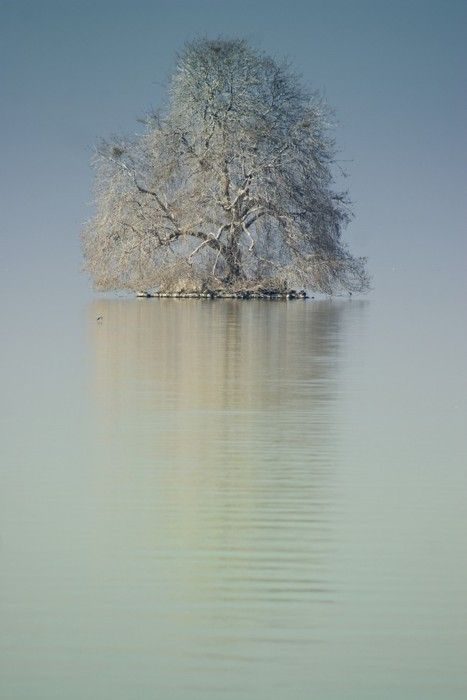 A lonely tree in Lake Geneva, near Montreux, Switzerland
