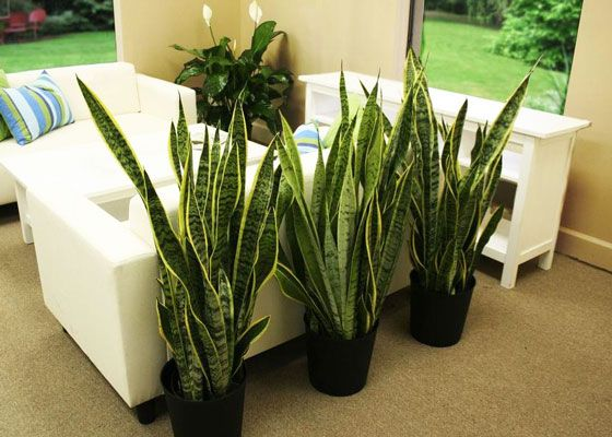 Are Your Houseplants Struggling? Are The Leaves Yellow Or Curling And  Brown? Read Up