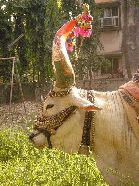 nandi bull horn (vehicle of Shiva and Parvati, Lasya being the dance of parvati)