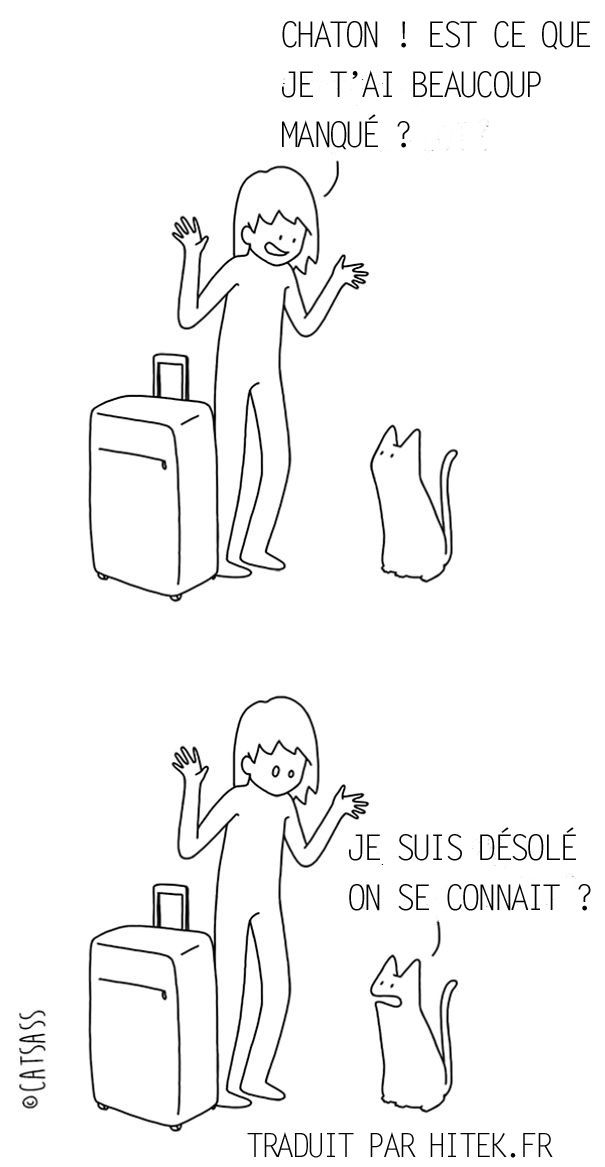 chat vs maitre 4