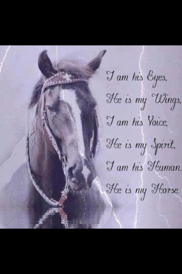 The life of a barrel racer. Beautiful horse poem. Gorgeous horse with a white blaze and a pretty face.