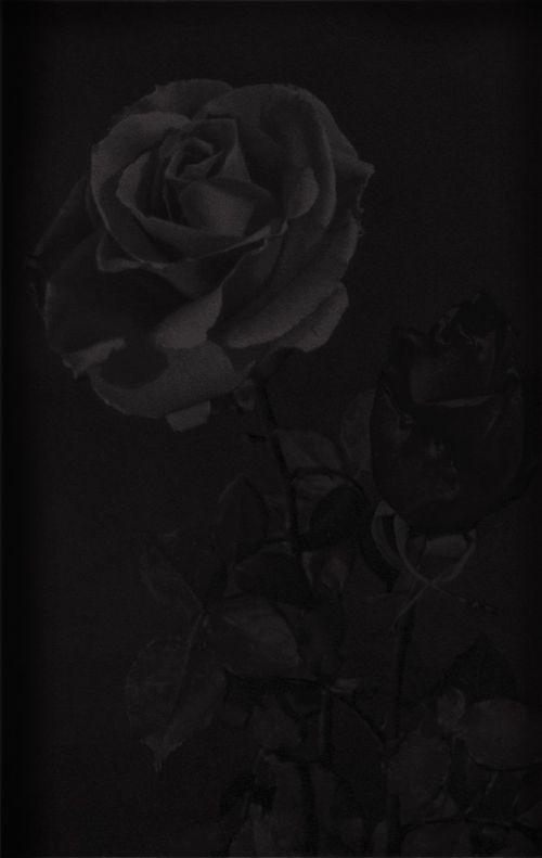 Black Rose Image Wallpaper