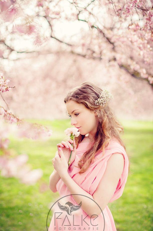 Zierkirsche, japanische Zierkirsche, Kirschblüte, Schwetzingen Schlossgarten, blühende Bäume , flower