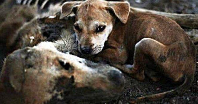 Construir un refugio de animales en la isla Gomera