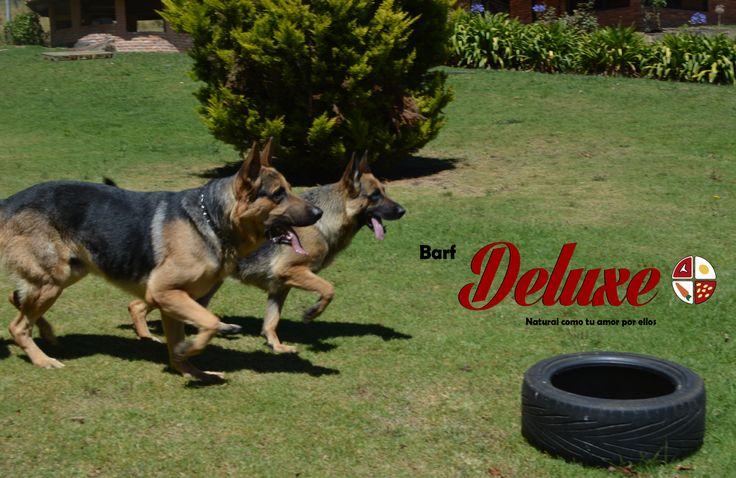 El alimento Barf Deluxe, aporta la  energía necesaria que tu mascota necesita. Domicilios : 3112823373-3165319909