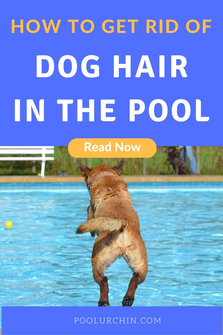 25 Best Dogs And Swimming Pool Images On Pinterest Pools Swiming Pool And Swimming Pools