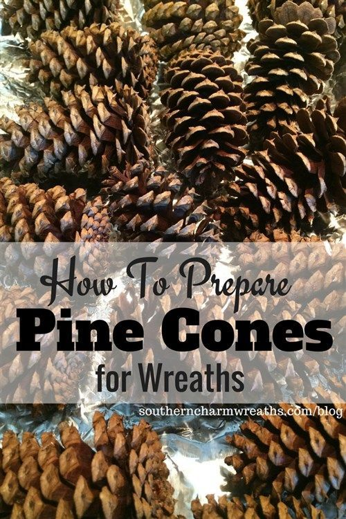 How to prepare pine cones for wreaths and crafts. I use pine cones everywhere during the fall and winter months - wreaths, garlands, Christmas trees, lanterns, etc. Great tip on wiring them too! http://southerncharmwreaths.com/blog/prepare-pine-cones-for-
