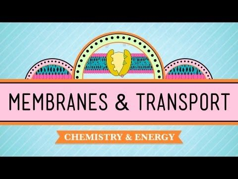 In Da Club - Membranes & Transport. I found this on YouTube when I was studying for bio. This is the best thing ever. I wish this guy could be my biology teacher..