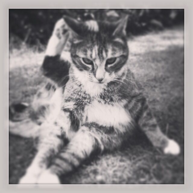 Sadly not alive anymore - but she was a very loving cat!