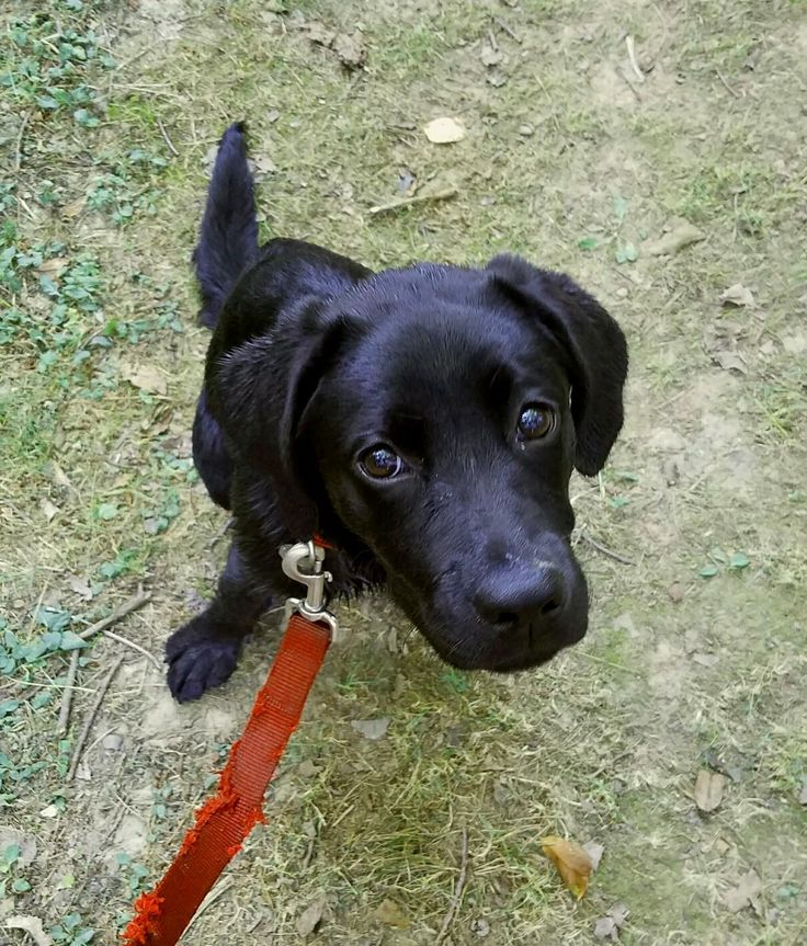 Buy or sell dogspuppiesforsale.com puppies puppy dogs petpuppy finder websites puppies for sale dogs puppies for sale us puppies for sale near me puppies for sale craiglist cheap puppies for sale near me cheap puppies for adoption places that sell puppies near me puppy find