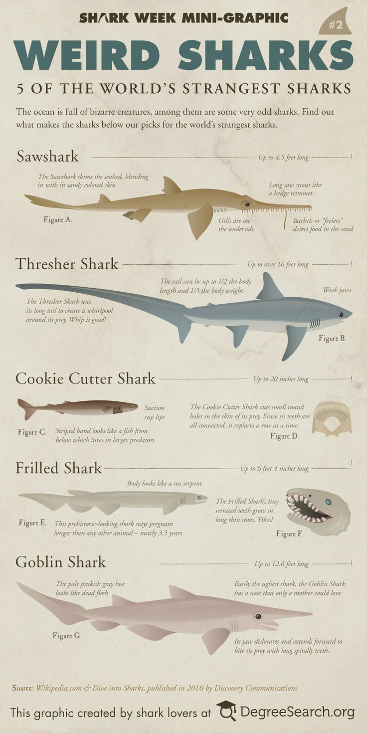 Weird Sharks!  If only Shark Week had more specials about these!  In the past six years, there's only been one special that didn't focus on attacks or hunting (2006-2011)