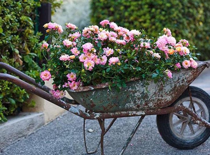 How to Care, Plant, and Prune Drift® Roses. Also different colors and Landscape Ideas for Drift® Roses using containers, hanging pots and in Landscape Beds.