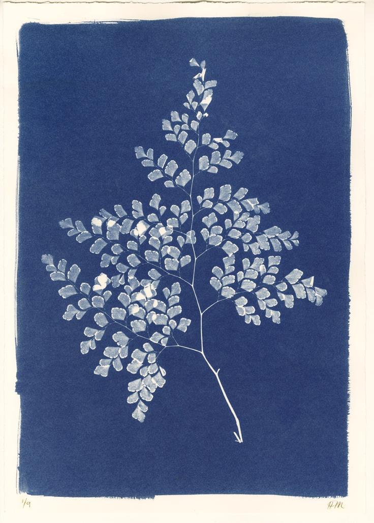 Sri Lankan Sprig of Leaves Cyanotype by Henrietta Molinaro at Wilson Stephens & Jones http://www.wilsonstephensandjones.com