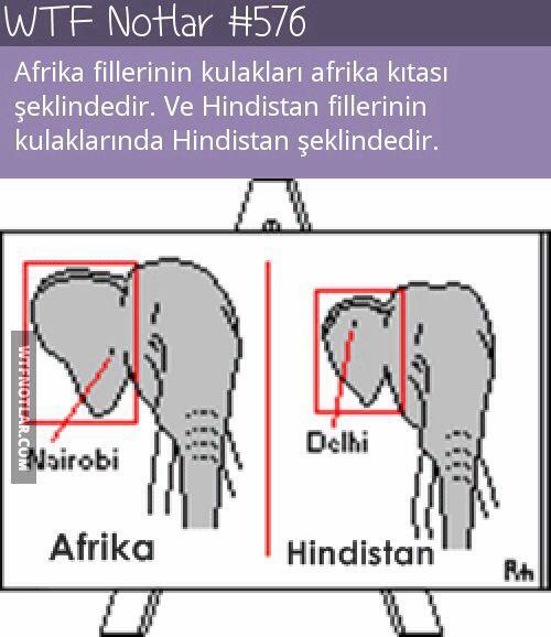 Ülkelere göre filler