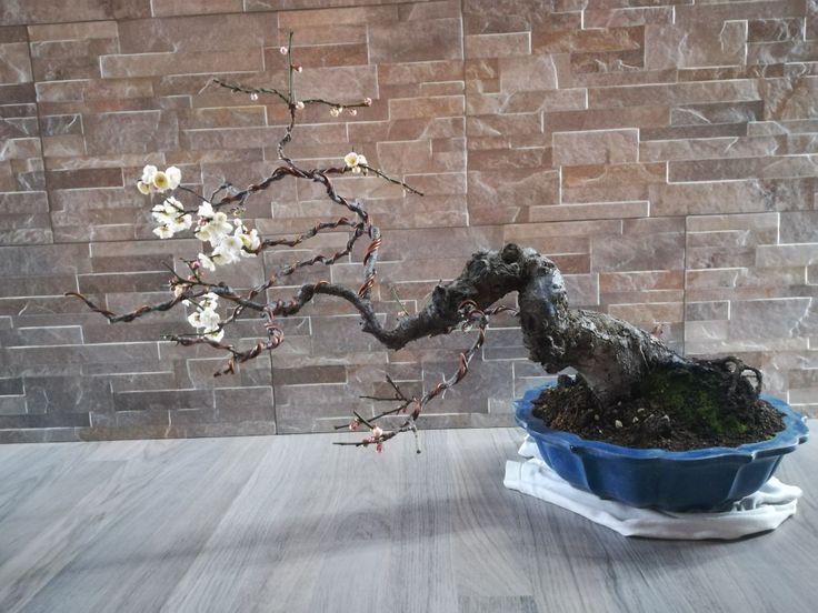 Prunus mume di Roberto Camurri