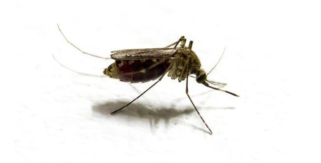 6 Simple Ways To Prevent Mosquito Bites
