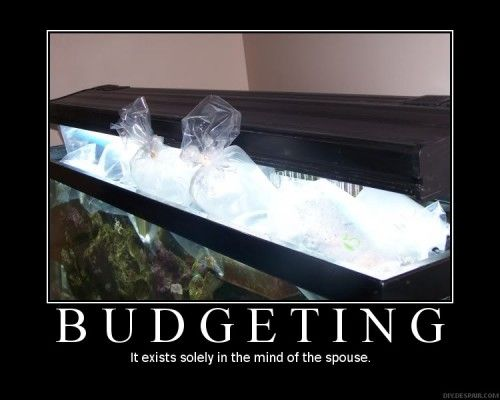 How to setup a saltwater reef aquarium on a budget.