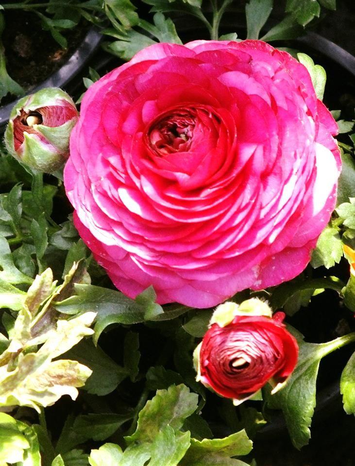 Çiçekler-3-1017