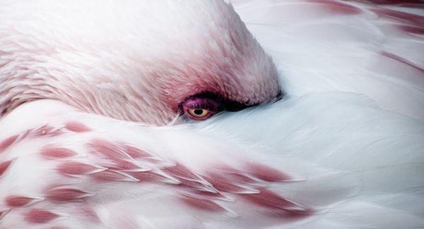 Top 30 des plus belles photos de 2014 selon national Geographic, le cliché qui envoie du pâté