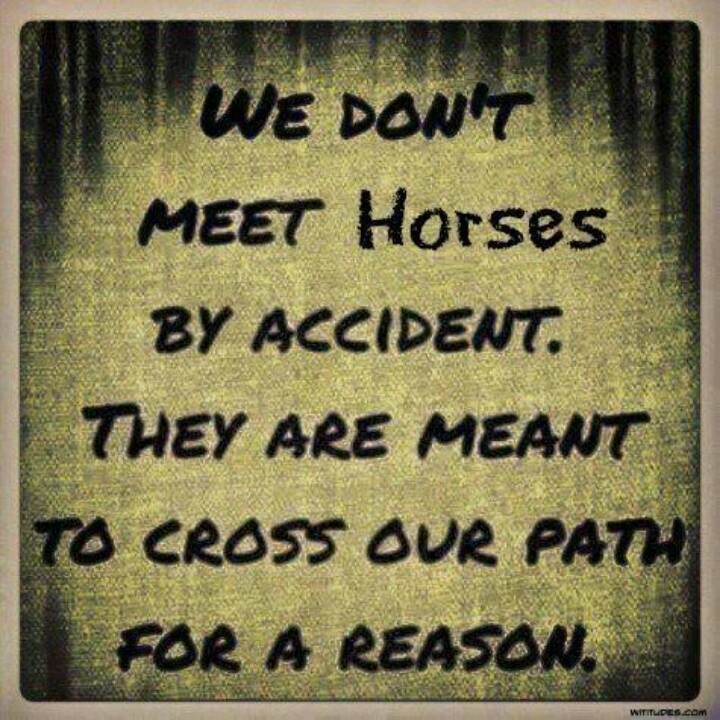 You Meet Someone For A Reason Quotes: Live Horse Quotes. QuotesGram