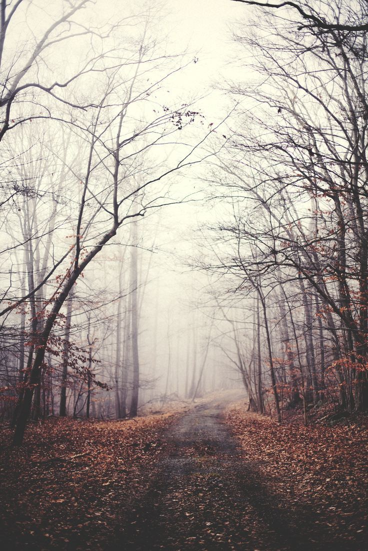 Fall Road Scenery Nature Photography Landscape