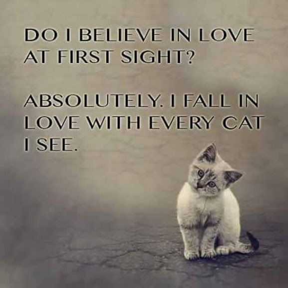 Quotes About Cats Glamorous 687 Best Cats Images On Pinterest  Kitty Cats Funny Kitties And
