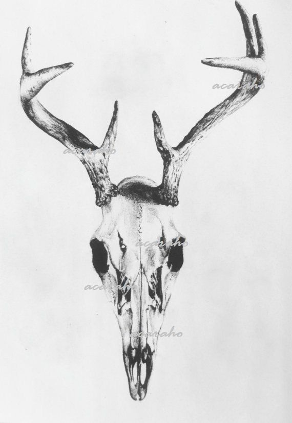 Print of Original Drawing Deer Skull Nature Art by Acaraho on Etsy