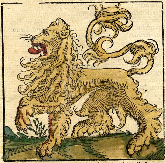 lion d'afrique, sebastian münster, 16th c.