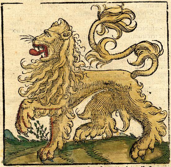 lion d'afrique, sebastian münster, 16th c.