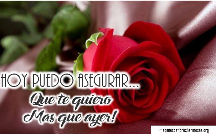 Imágenes de rosas con dedicatorias de amor