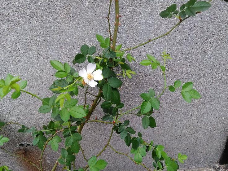 yoshikawa miho(@books_hyacinth)さん   Twitter