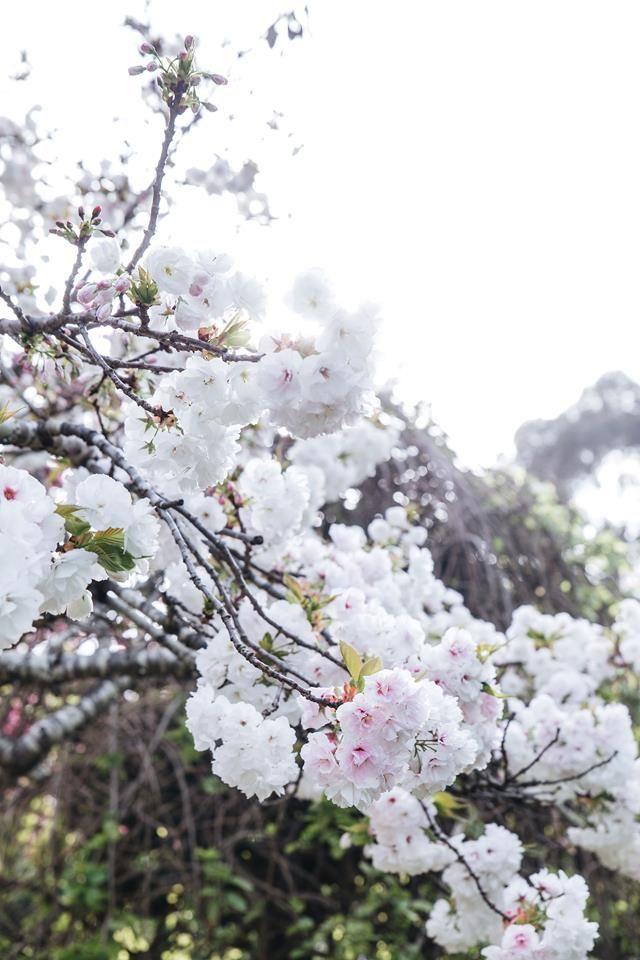 Ford House Garden Bridgetown Australian Garden Design Flowering Cherry Tree Australian Garden