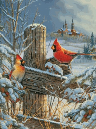1000 Ideas About Cardinal Birds On Pinterest Cardinals