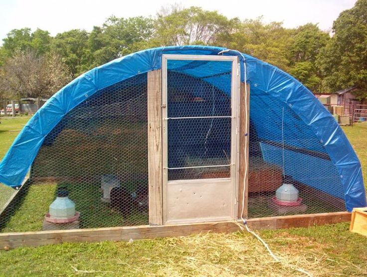 Old trampoline turned into a hoop house for chickens/dogs out at our place?