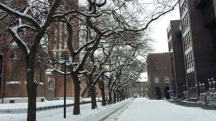 Szeged, Dóm tér télen