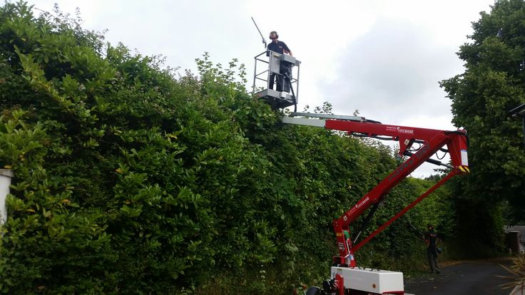 This is Jerry, just as well he is not scared of heights but I bet the view is amazing. Commercial and residential hedge trimming and disposal service.