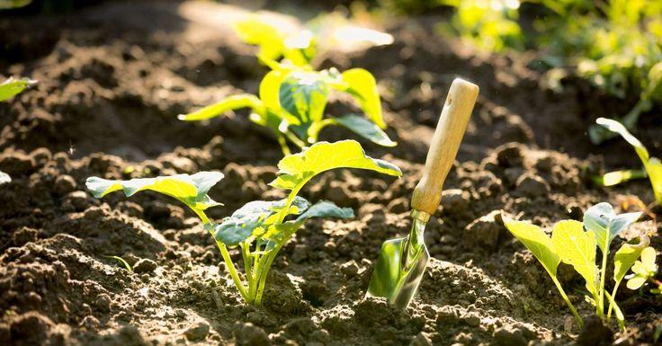Vol goede moed begin jij met het planten van je groenten, fruit en kruiden. Je verzorgt je planten goed en ziet ze langzaam groeien. Bij het oogsten blijkt de groei van de ene plant echter tegen te vallen in verhouding met de groei van de andere plant. De wortels zijn krom, terwijl de kolen letterlijk
