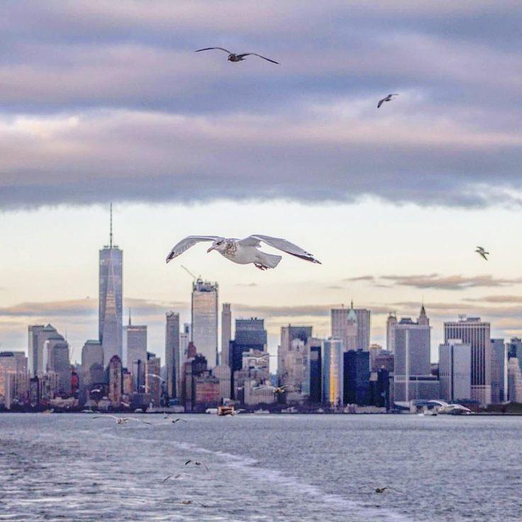Freedom vs Freedom by @KellyrKopp | newyork newyorkcity newyorkcityfeelings nyc brooklyn queens the bronx staten island manhattan
