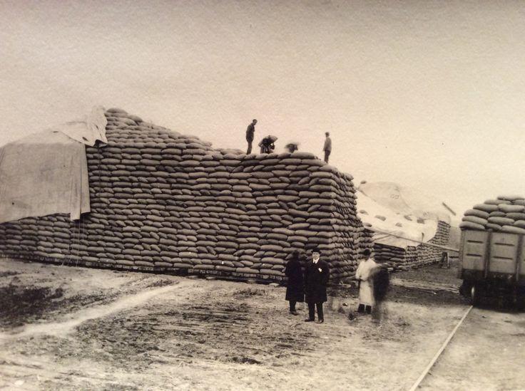 Verladen von Jutesäcken, wahrscheinlich Kaffee, um 1925