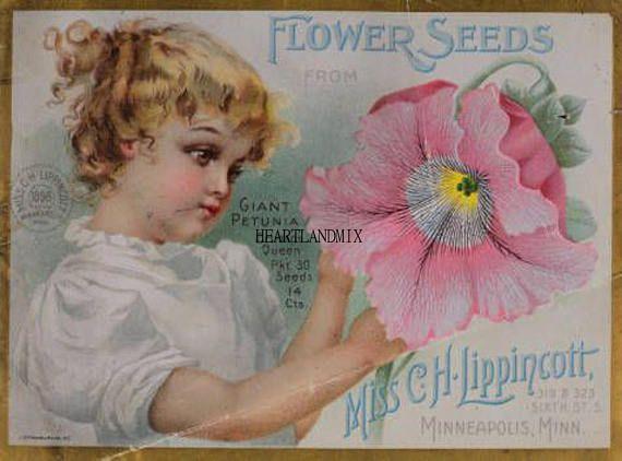 Vintage Lippincott Minneapolis Seed Catalog Print Wall Art