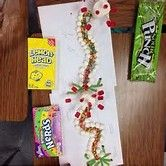 Image result for Candy Neuron Model