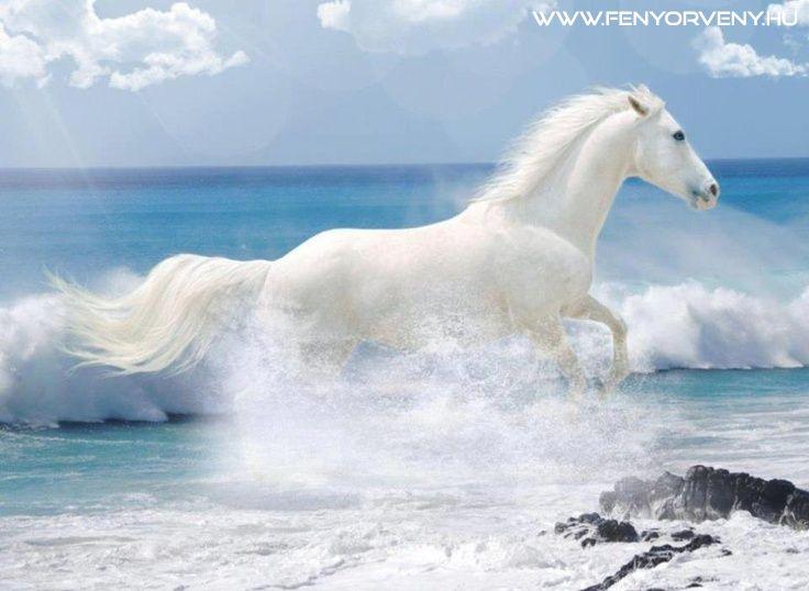 Az ősi mítoszokban a Nap szekerét fehér vagy/és arany lovak húzták, így a ló gyakran összekapcsolódik a Nap minőségével, útjával, mozgásával, fénnyel, termékenységgel. Az ellenpólusnál: a temetési rítusoknál is megjelenik, illetve hátán az ember be- és kilovagol a világból. / ~ állat szimbolika, állat szimbólumok, ezotéria, fényörvény, hírek, jelképek, pókok, rejtélyek, spiritualitás, szimbólumok, titkok,