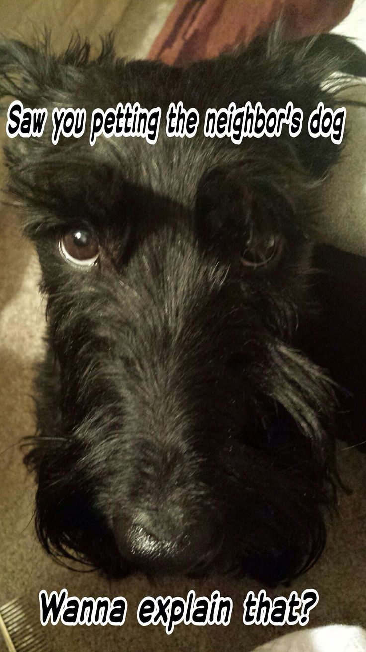 Stupell yorkie dog 3 panel decorative fireplace screen - This Look Is Known As The Scottie Staredown I Get It All The