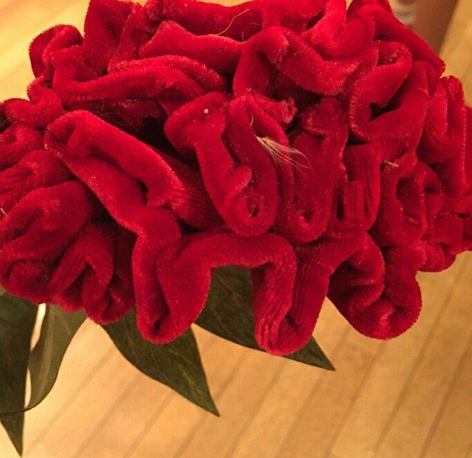 Colour/texture_flower
