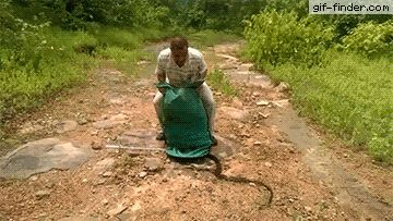 Man Releases Rescued Snakes Back into Wild | Gif Finder – Find and Share funny animated gifs