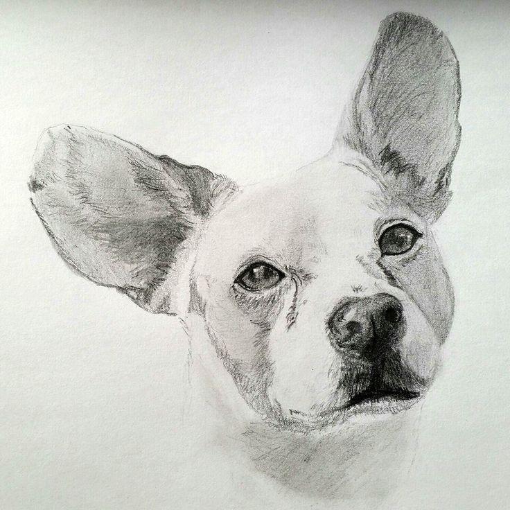 The 16 best Hundepullis images on Pinterest | Small dogs, Smallest ...