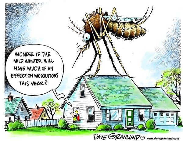 17 Best Images About Bug Humor On Pinterest Cartoon