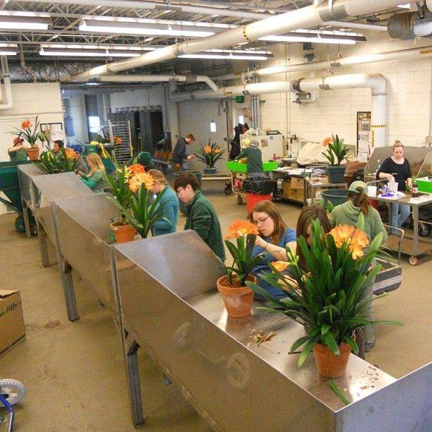 clivia plant how to grow