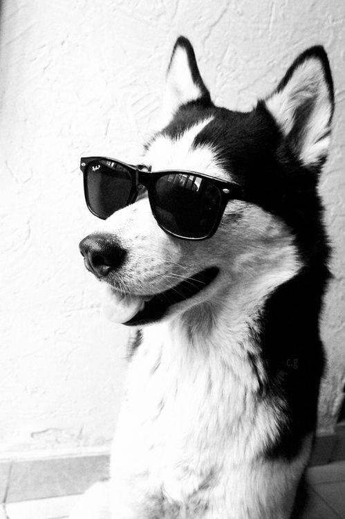 Un chien et des #lunettes #sunglasses #eyeglasses